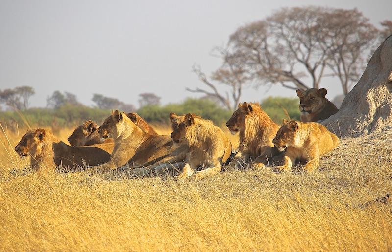 Σαφάρι στην Κένυα