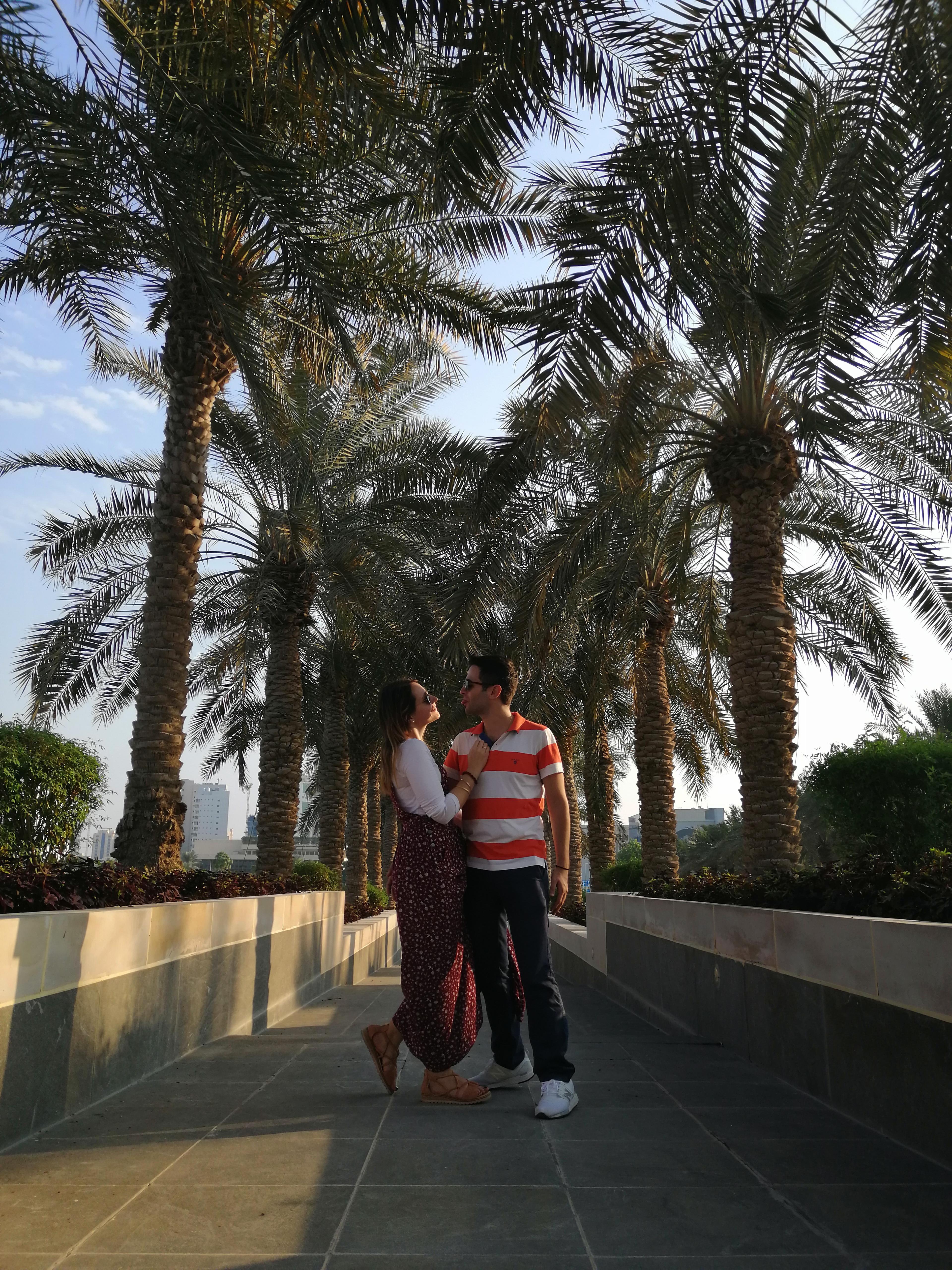 οι φοίνικες στην Ντόχα